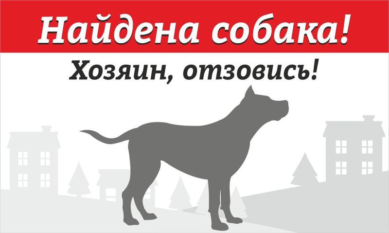 того, найдена собака картинки соблюдению требований служебному